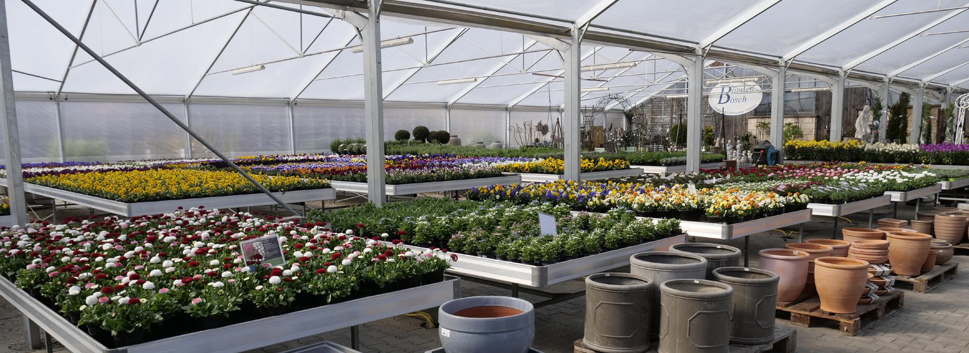 Blumen-Bosch-Unternehmen