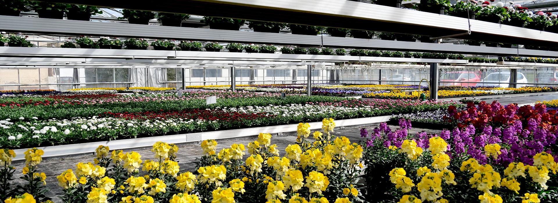 Blumen-bosch-slide04