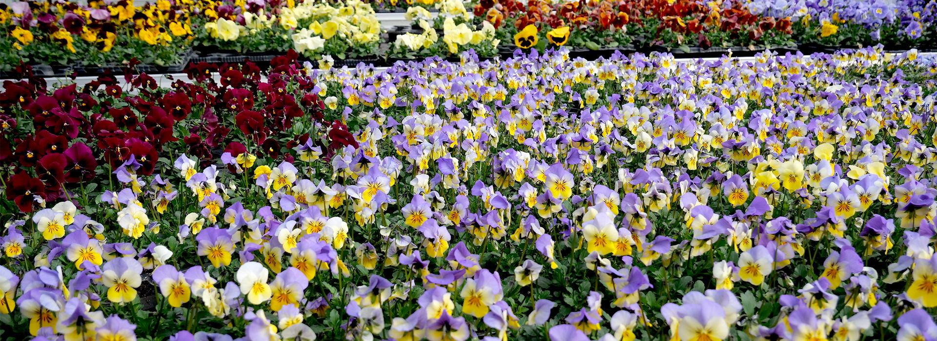 Blumen-bosch-slide05