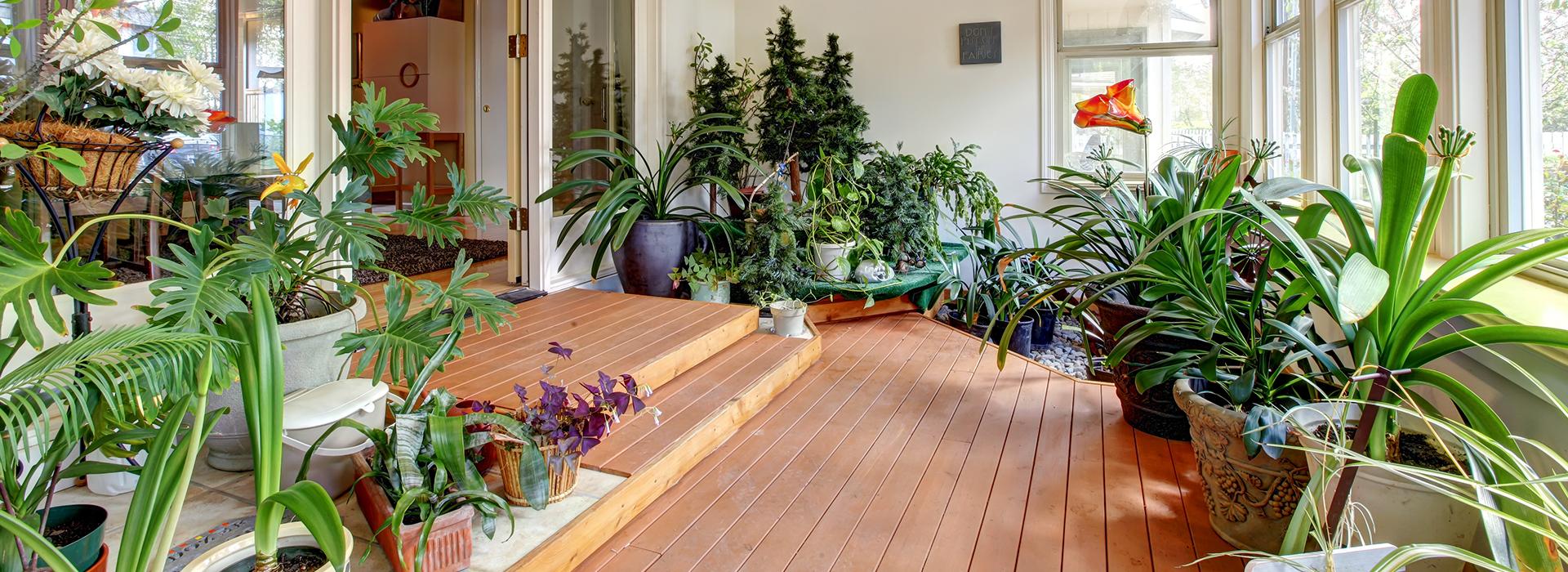 Zimmerpflanzen005