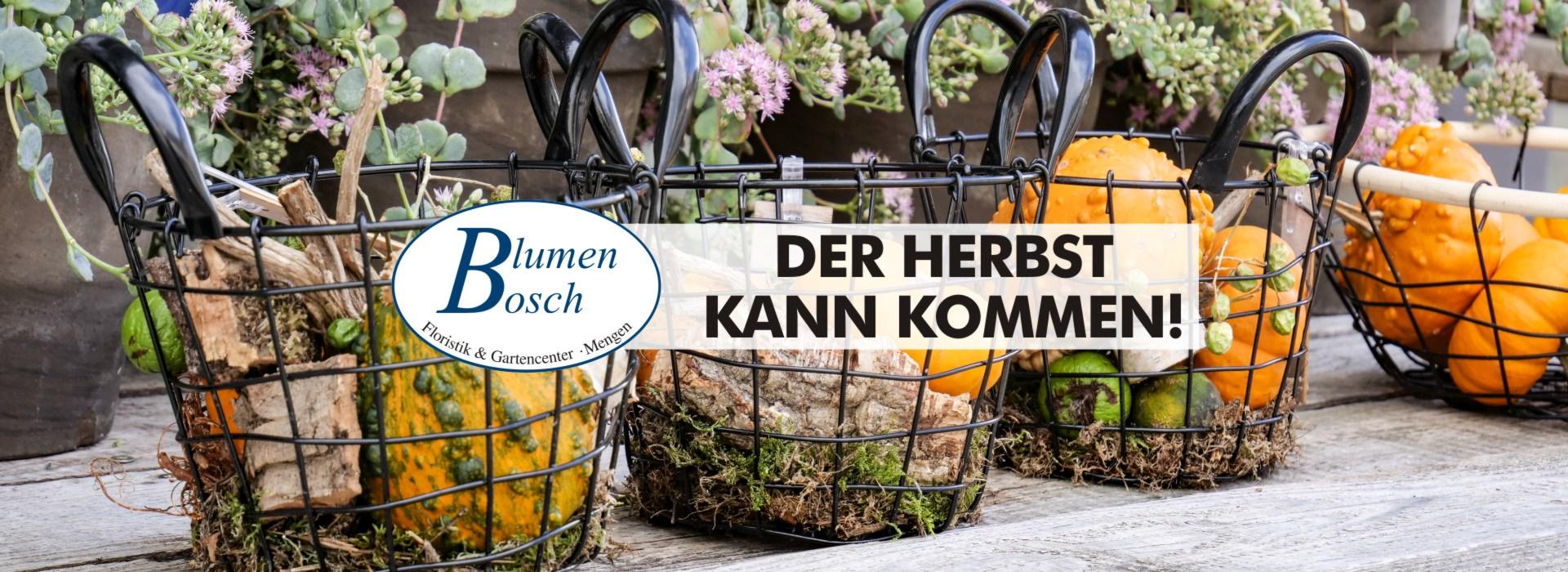 Blumen-Bosch-16-09-20-slider